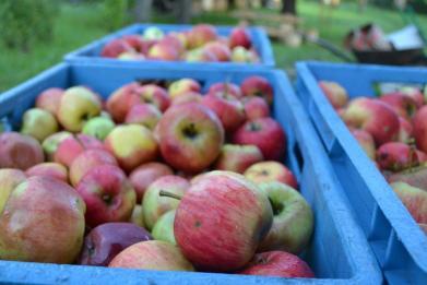 Zveme vás na Jablečnou slavnost do Hostětína, 25. září 2016