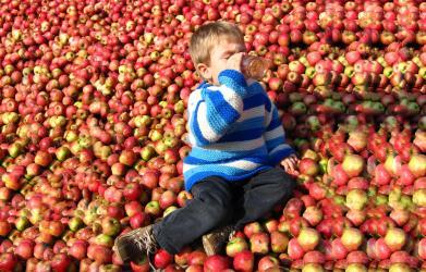 Přijeďte nám pomoct na Jablečnou slavnost