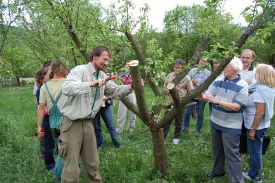 Ovocnářské kurzy v Hostětíně: Poradíme vám, jak pečovat o ovocné stromy